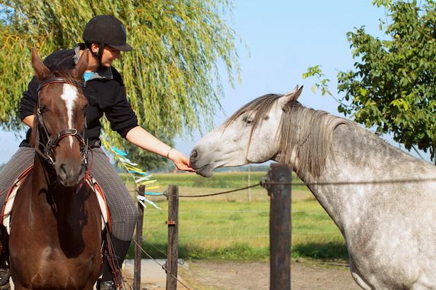 Paard coaching